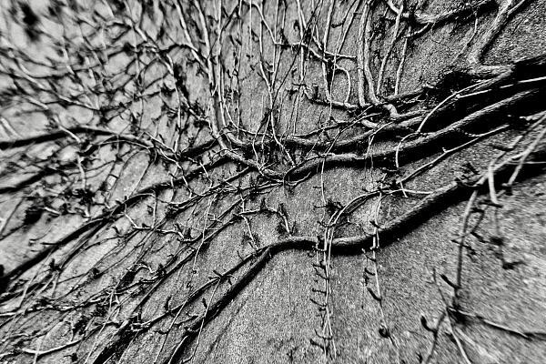 Site plaquette de Nicolas Bernié, photographe, infographiste, vidéaste, plasticien basé à Martres-Tolosane, en région Toulousaine. Spécialiste en communication visuelle, portrait, corporate, reportage & architecture.
